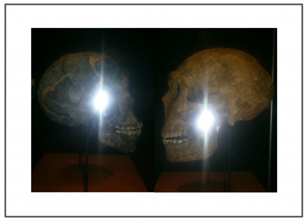 neandertalensis_sapiens