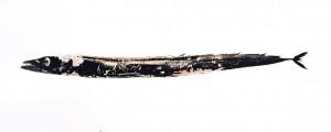 Espada preta I, 1992, 37,5 x 119 cm, s/w-Barytpapier koloriert, Edition 5