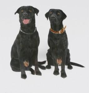 Meggy und Zucca II, 2008, 94 x 91cm s/w-Barytpapier koloriert Edition 2