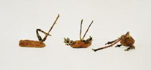 Drei keimende Kartoffeln, 2001, 29 x 61 cm, s-w-Barytpapier koloriert, Edition 2