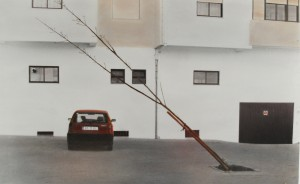 Angefahrener Baum (Castello Branco, Portugal), 2008, 52,5 x 84 cm, s-w-Barytpapier koloriert, Edition 2