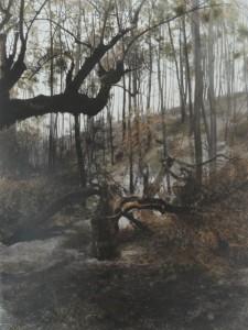 Verbrannter Olivenbaum II (Bairrada, Portugal), 2008, 62 x 81 cm, , s-w-Barytpapier koloriert, Edition 2