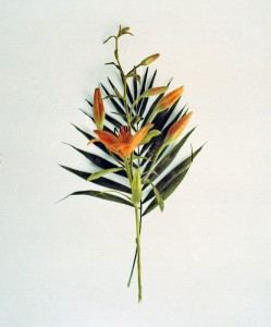 Blumenstrauß Nr.14, 1992-2001, 58 x 49 cm, s-w-Barytpapier koloriert, Edition 2