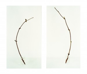 Diptychon mit Zweigen, 2003, 2 x 84 x 47 cm, s-w-Barytpapier koloriert, Edition 2