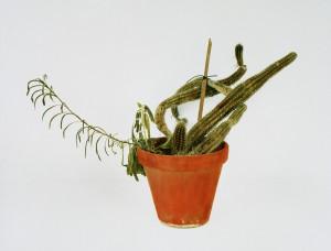 Kaktus, 2002, 59,5 x 75,5 cm, s-w-Barytpapier koloriert, Edition 2