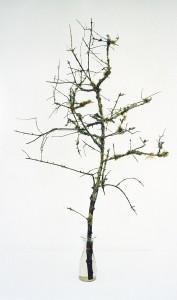 Olivenzweig mit Pilzgeflecht, 2002, 166 x 100 cm, s-w-Barytpapier koloriert, Edition 2