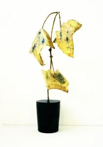 zimmerpflanze-3