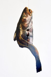 Dorsch I, ca. 1991, ca. 130 x 100 cm, s-w-Barytpapier koloriert