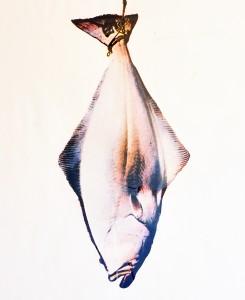 Heilbutt, ca. 1991, ca 140 x 100 cm, , s-w-Barytpapier koloriert