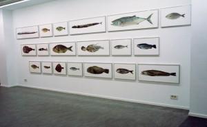 Fische, Installationsansicht Galerie Van Laere Contemporary Art, Antwerpen, 1998