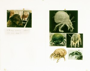 Man & Nature, 2013, 37,5 x 48 cm, s/w-Barytpapier koloriert, Edition 2